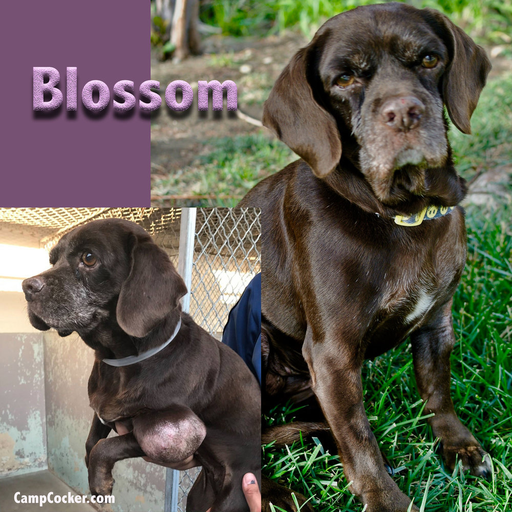 blossomB&A.jpg