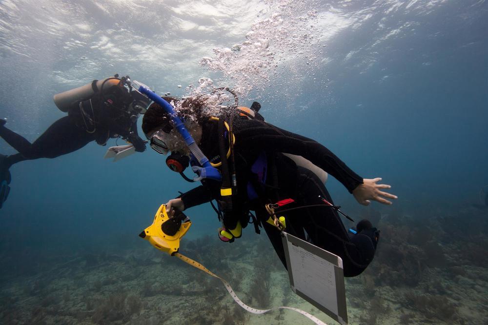 underwater archaeology, Key Largo FL keys 2014.JPG