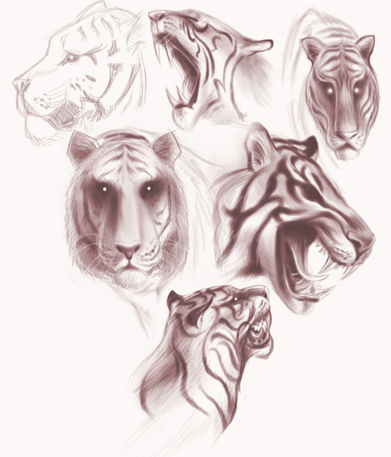Tiger studies. For some future personal project. Not exactly sure what yet. Ideas are taking shape.