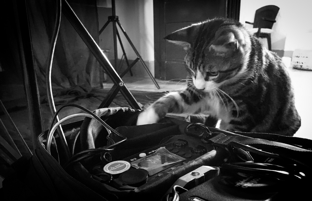 Pre-shoot - Inquisitive minds... 'Expósito' having a look inside my camera bag.