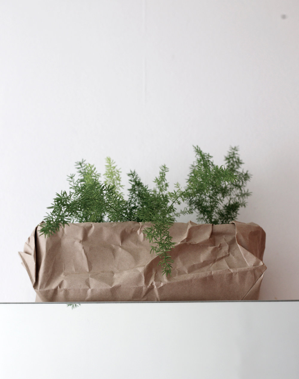 VicRd-plant.jpg