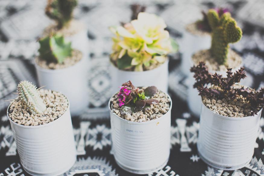mex-wed-cactuses.jpg
