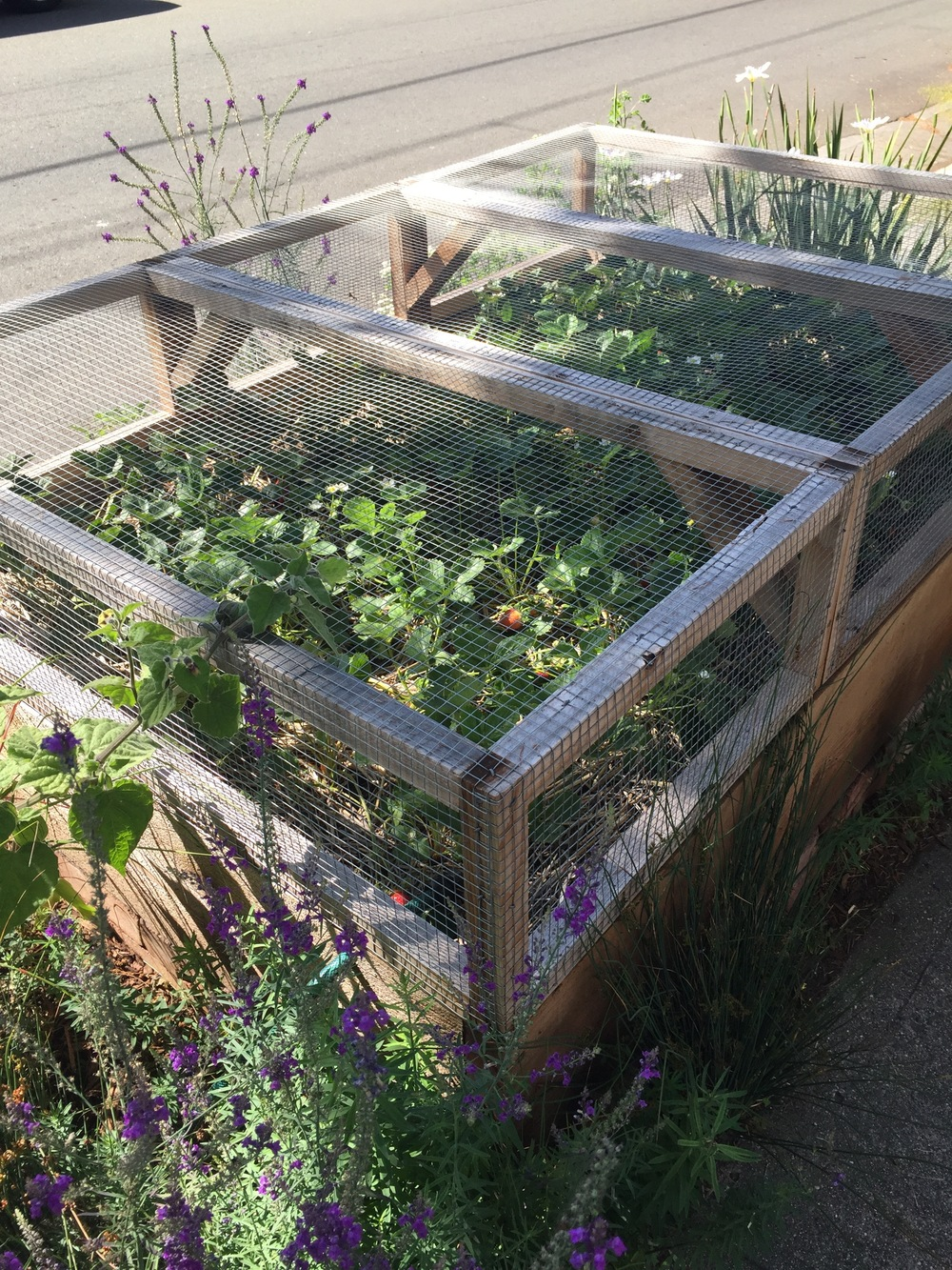 an ingenious way of protecting a raised strawberry bed from critters