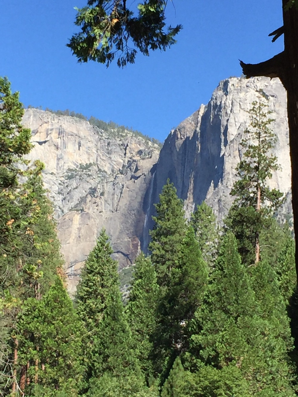 Yosemite Falls from the Valley floor