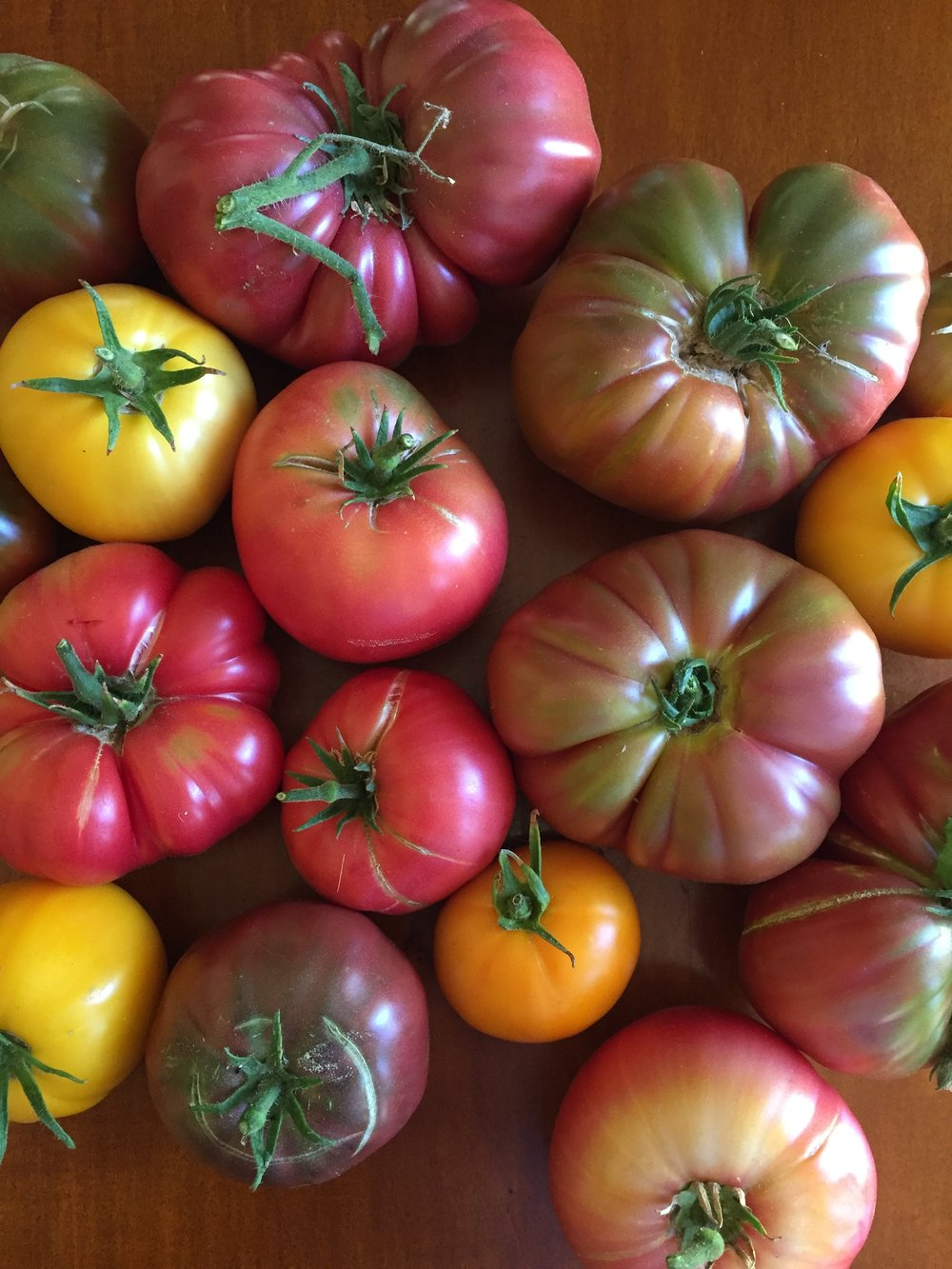 a variety of tomatoes from our garden