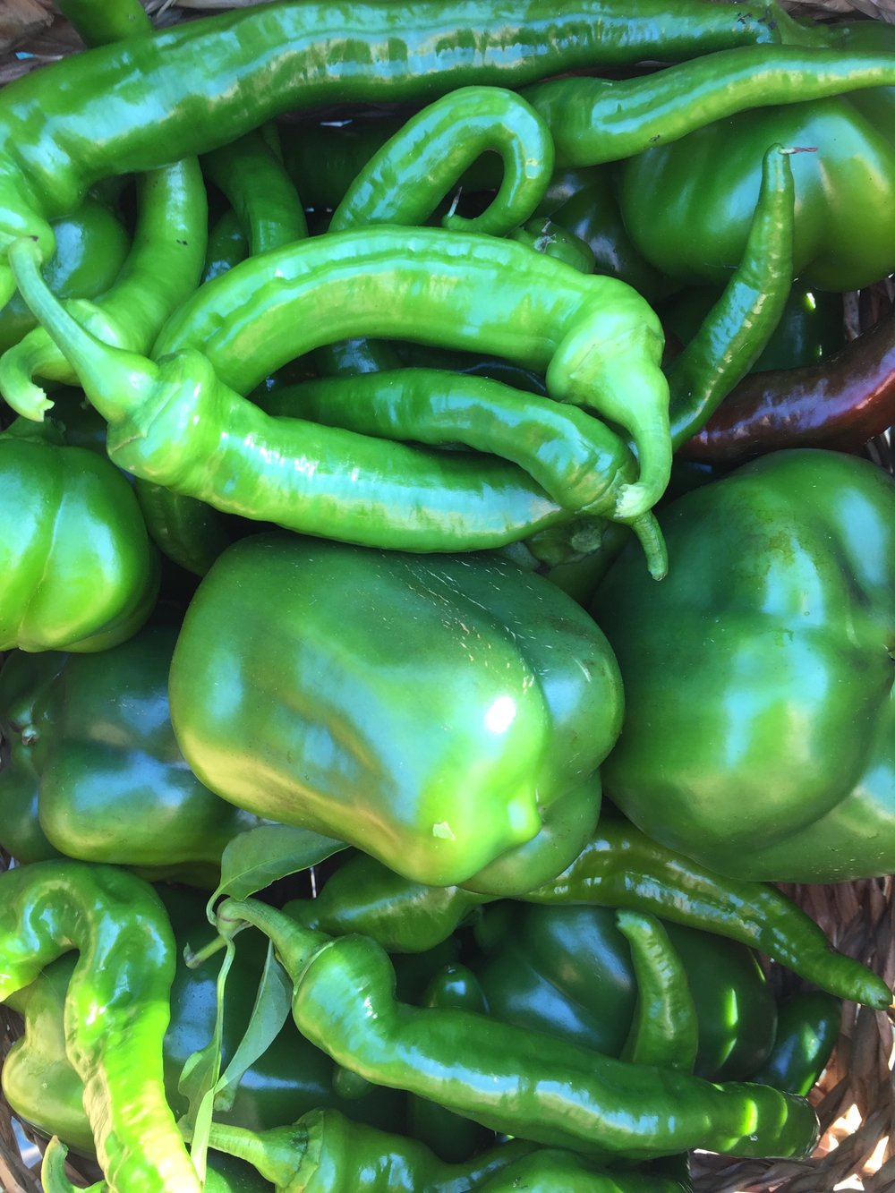 I harvested bell peppers, Jimmy Nardellos, pimentos, Jalapenos, and Maule's Red Hots.