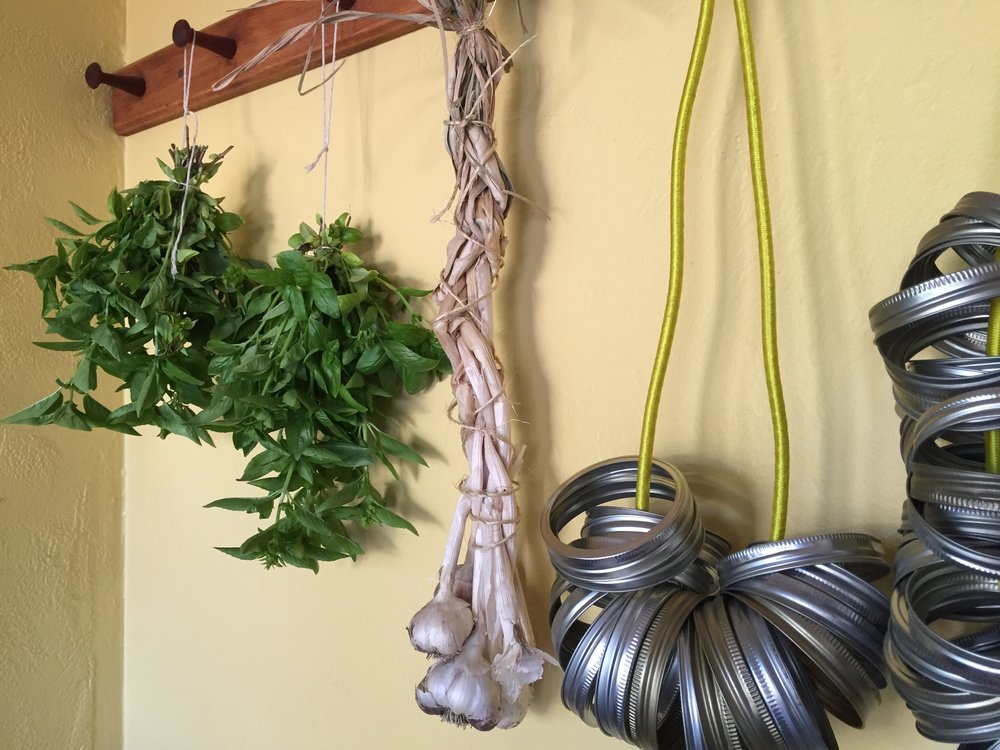 Hanging some basil to dry. Even though dried basil is a very poor substitute for fresh, I use it when making spaghetti sauce and garlic bread.