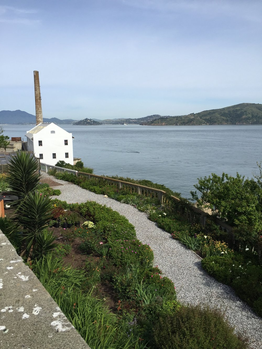 One of the 'official' gardens on Alcatraz, on the site of the old hospital. There are some historic roses planted here. as well as many native and exotic perennials and bulbs. Angel Island is in the background, on the right.
