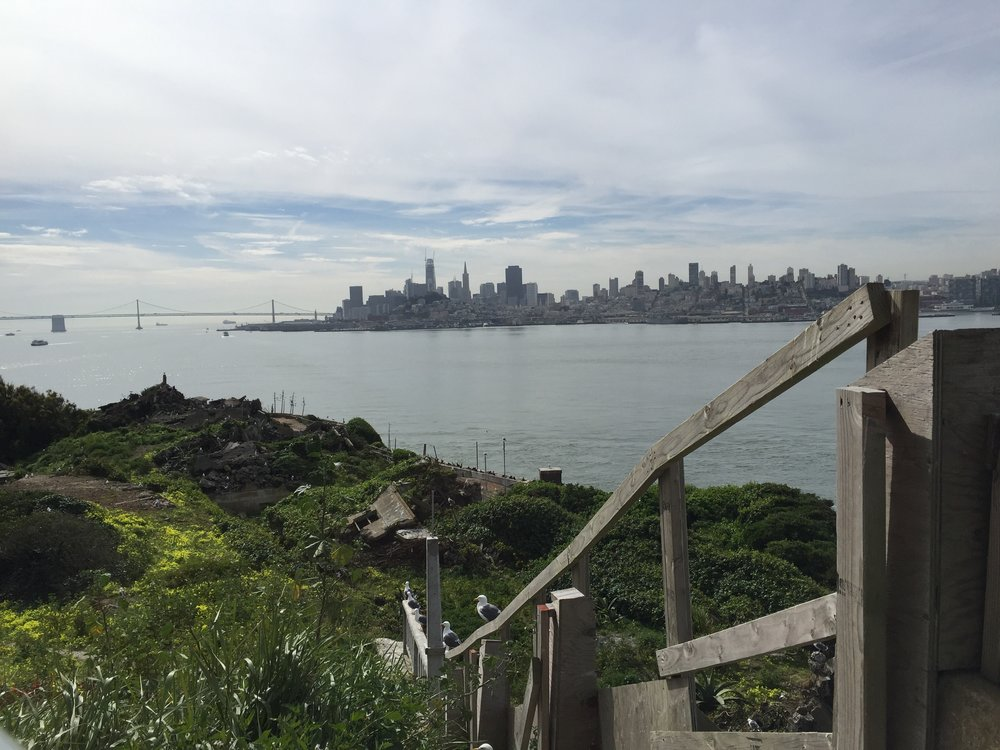 Seagulls nesting in an abandoned yard, and in the ruins of the guard's cottages; looking south to the San Francisco skyline, and part of the Bay Bridge