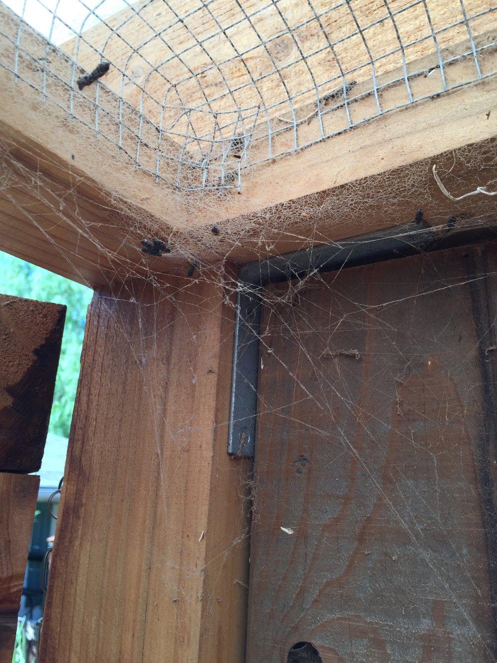 Spider webs!