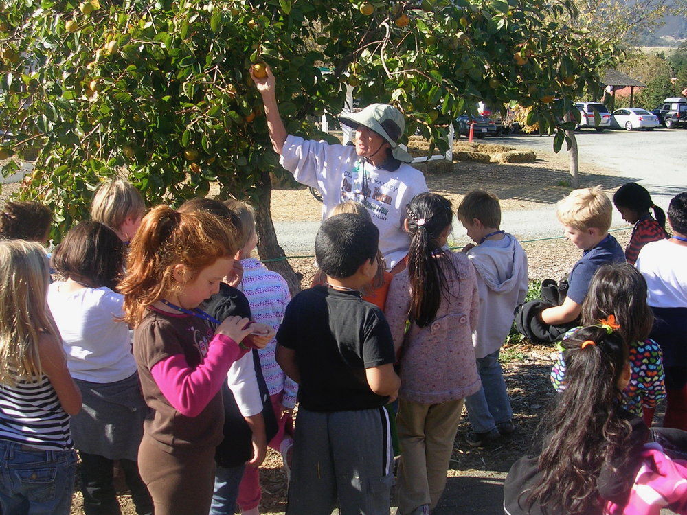 Not the first grade class last week. This is Kate's first grade class on a field trip to a local orchard. Kate's focus is on something else entirely, which has never been unusual for her, but most of the class was pretty into it if I recall correctly. (It was 8 years ago!)