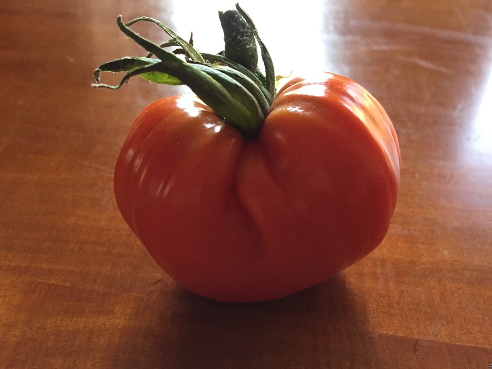 Our first ripe slicing tomato