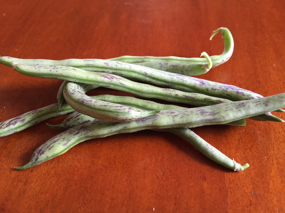 This was my first handful of ripe beans; now they are coming thick and fast and we're having them every other day. I went back to an heirloom that I grew many years ago and loved, and I think I always will stick with this one from now on. The variety is 'Rattlesnake,' and I adore the striping and the taste, which is best when the beans are still very young.