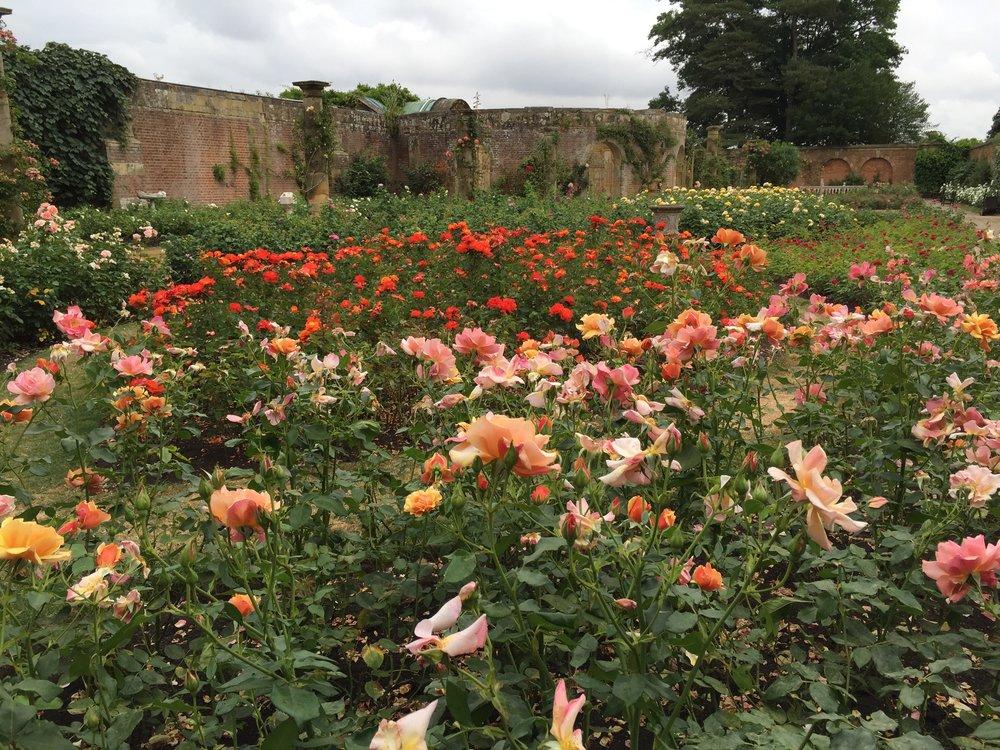 Hever Castle gardens, England