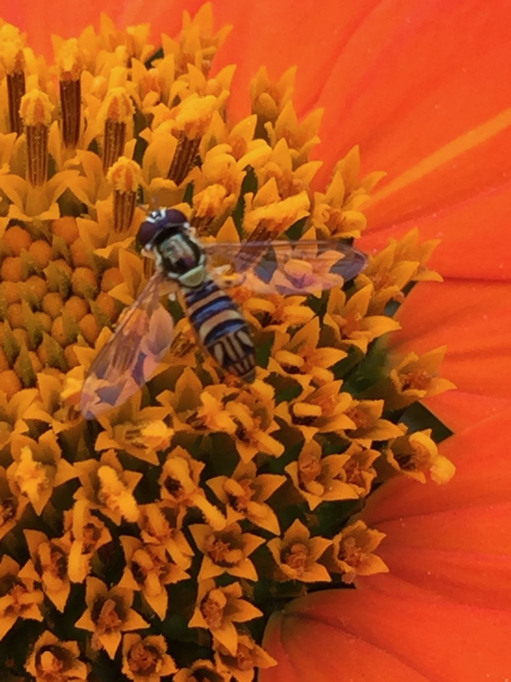 this is a hoverfly, though