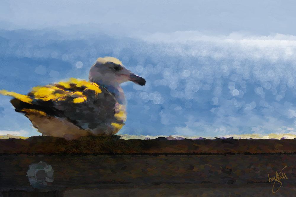 bird_0159_web.jpg