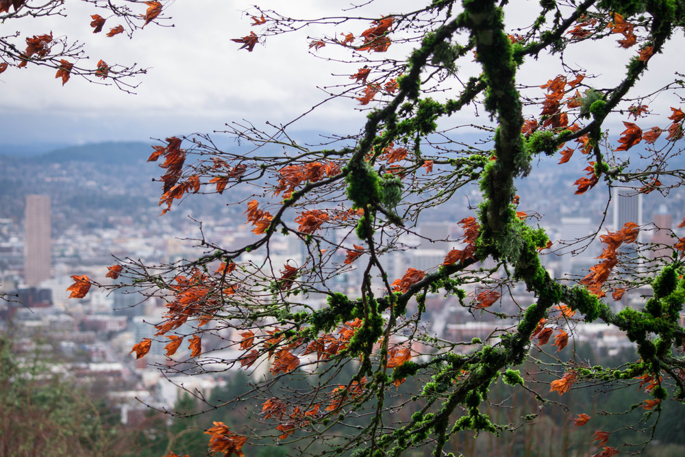 Bloom at Pittock Mansion | Portland, OR