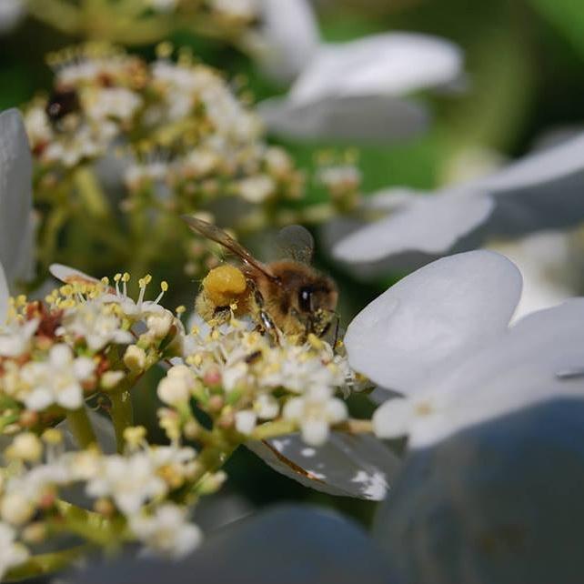 Bee's wax | Vancouver, WA