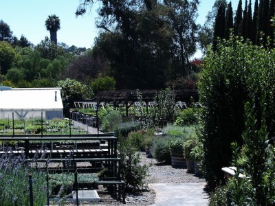 Nursery-Path-2-400x300.jpg