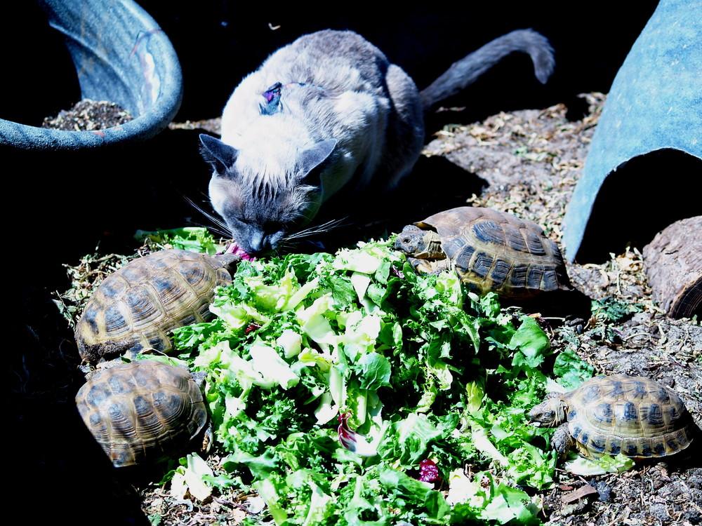 Tortoise2.2.jpg