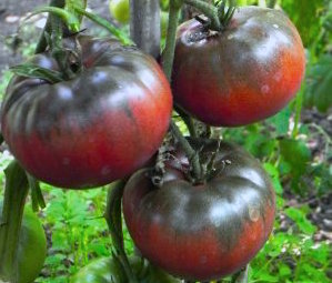Tomato.BlackFromTula.jpg
