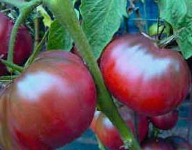 Tomato.BlackSeaMan.jpg