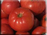 Tomato.Earliana.jpg