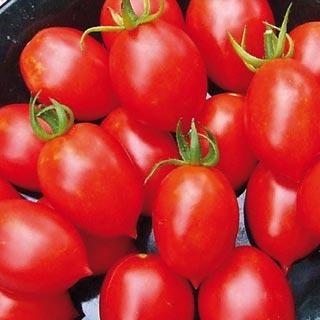 Tomato.PrincipeBorghese.jpg