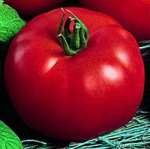 Tomato.Siberia.jpg
