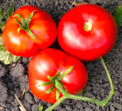 Tomato.Moskovich.200kb.jpeg