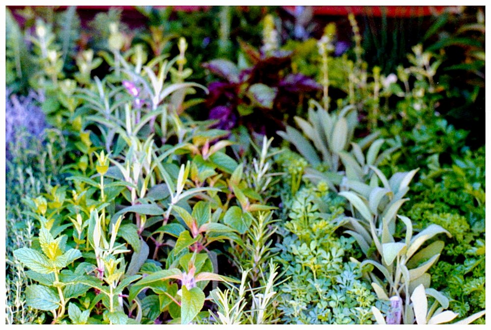 Assorted Herbs