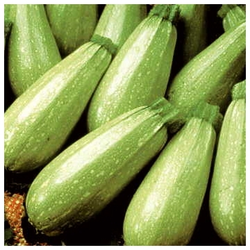 Persian Zucchini
