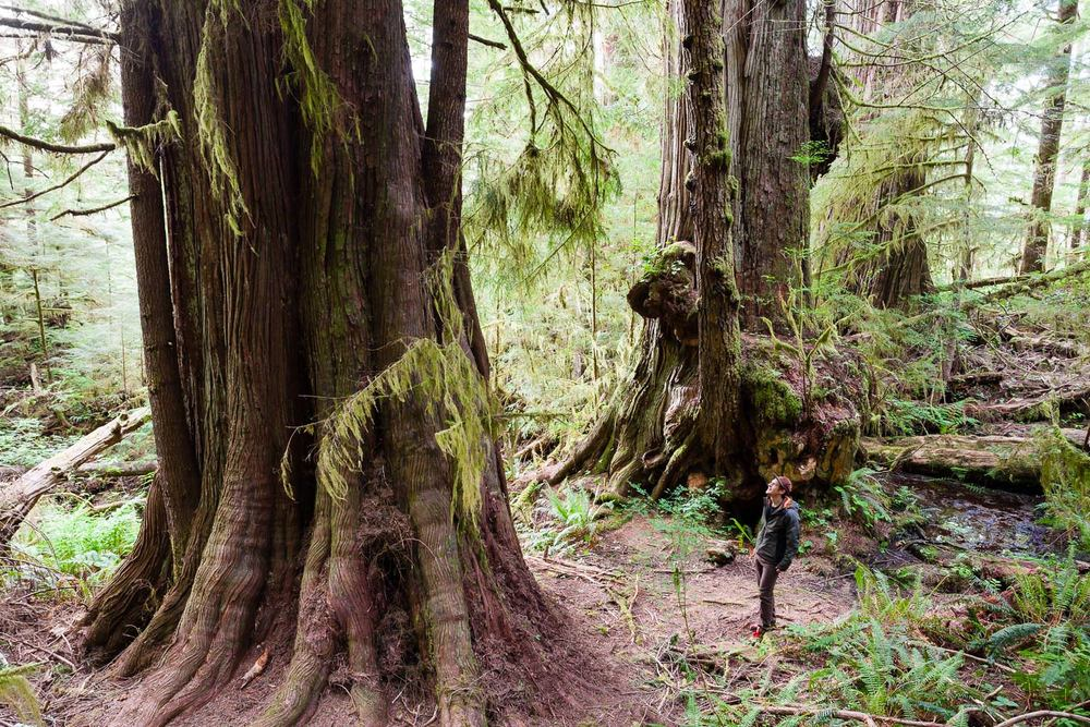 big-tree-tours-port-renfrew-bc.jpg