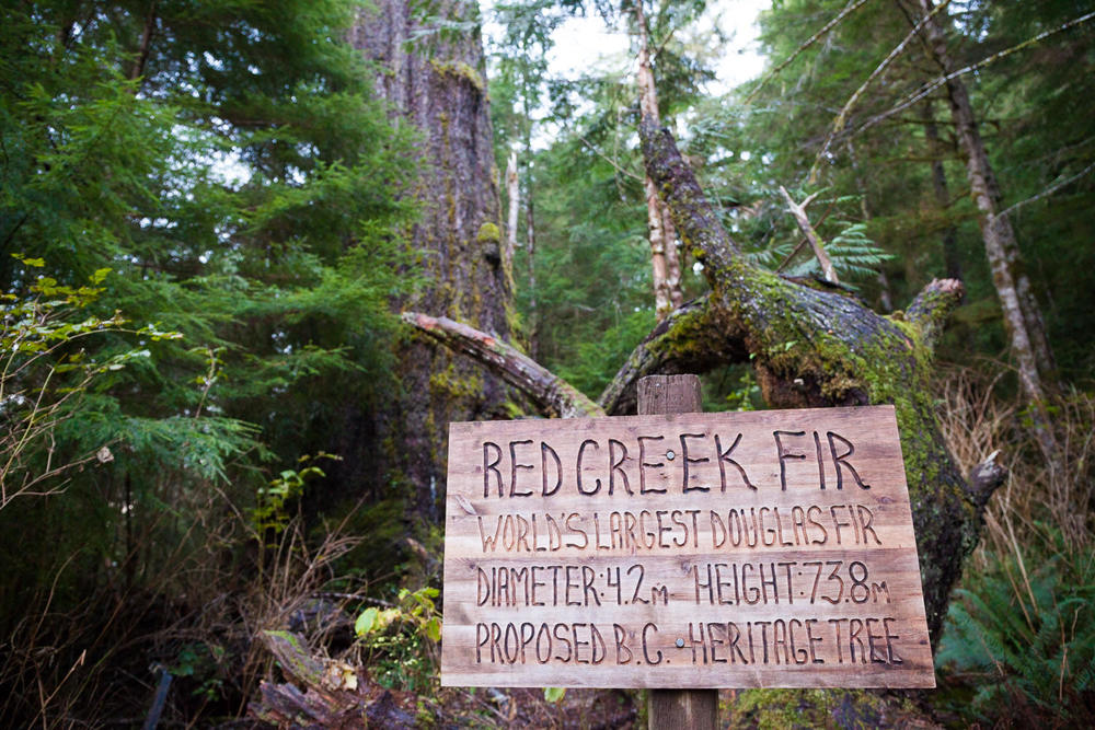 red-creek-fir-worlds-largest-sign.jpg