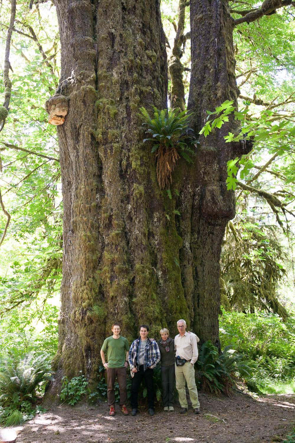 san-juan-spruce-tree-family-tour.jpg