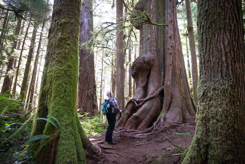 port-renfrew-old-growth-hiking-tours.jpg