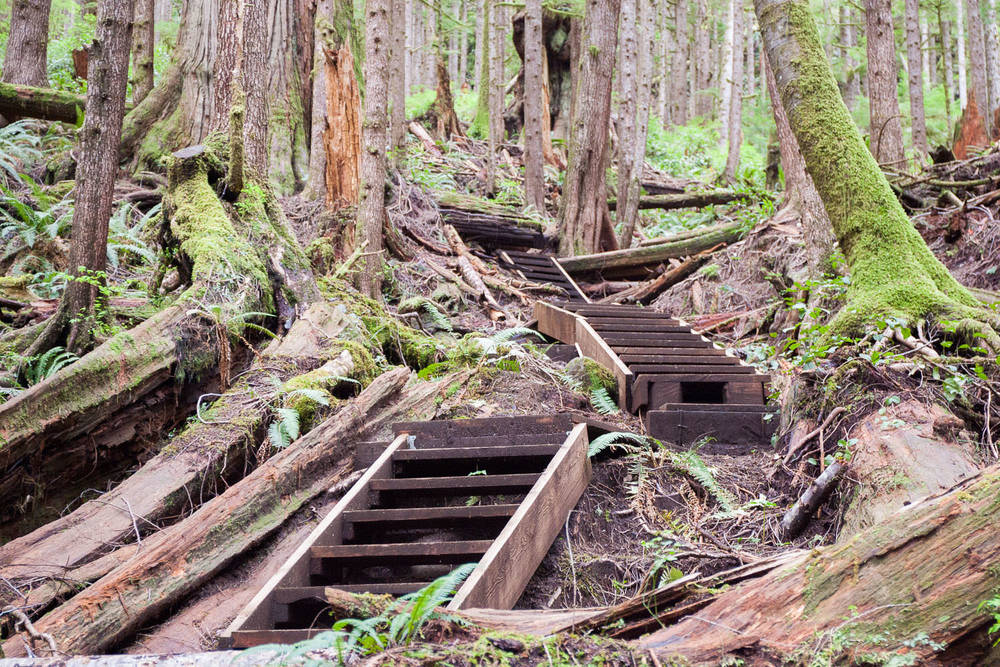 Trail-Examples-Avatar-12.jpg
