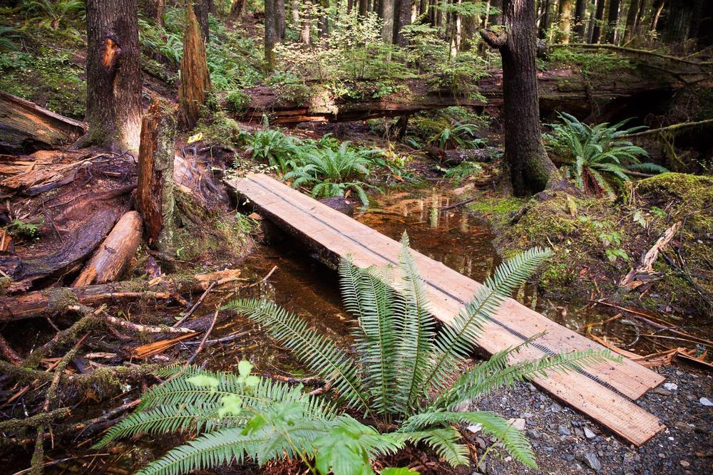 Trail-Examples-Avatar.jpg