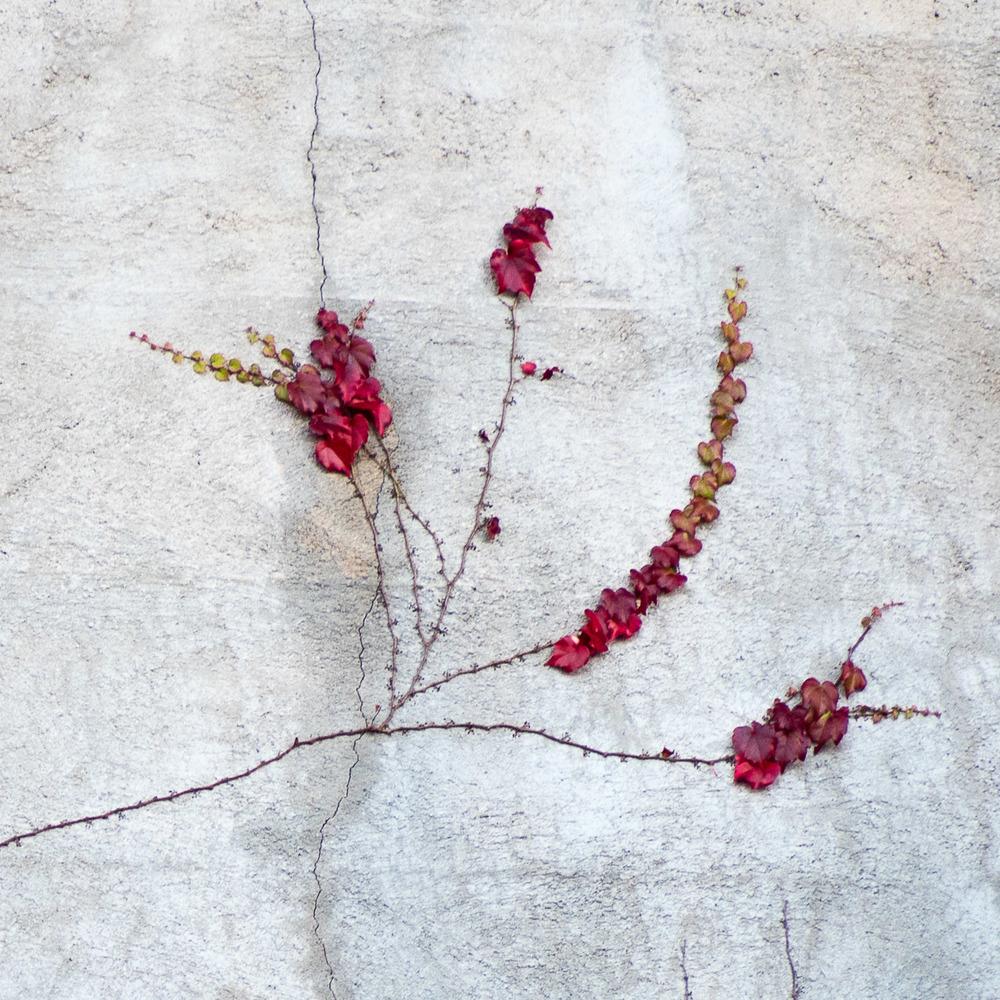 151214 Wall Vine 2 8x8-0289.jpg