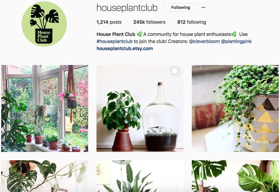 @houseplantclub -