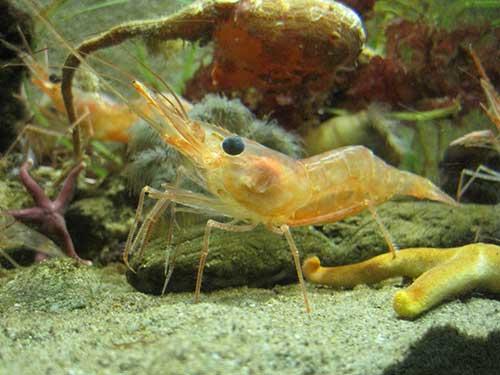 Photo de crevette