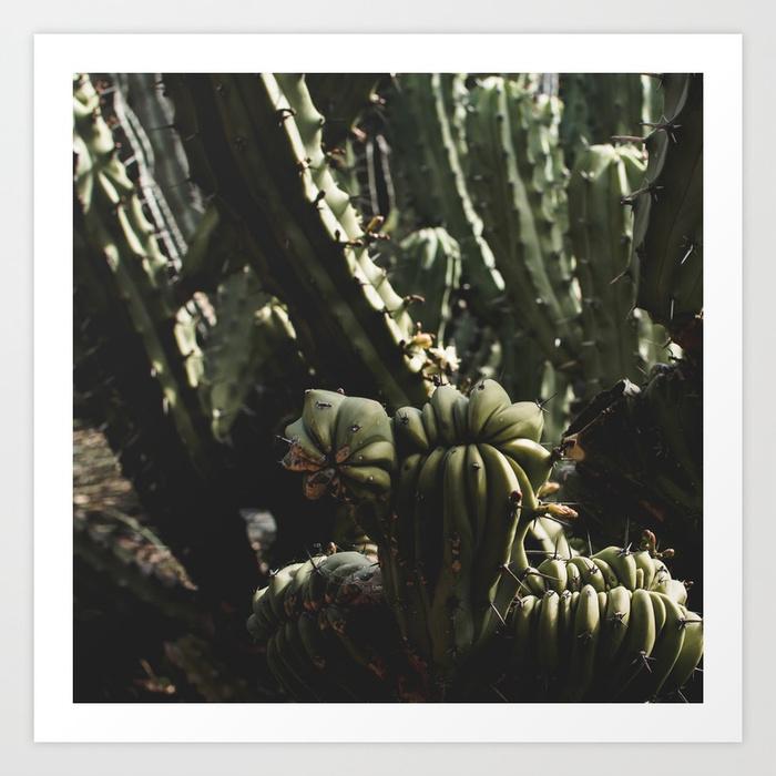 - Cactus_0003 Art Print