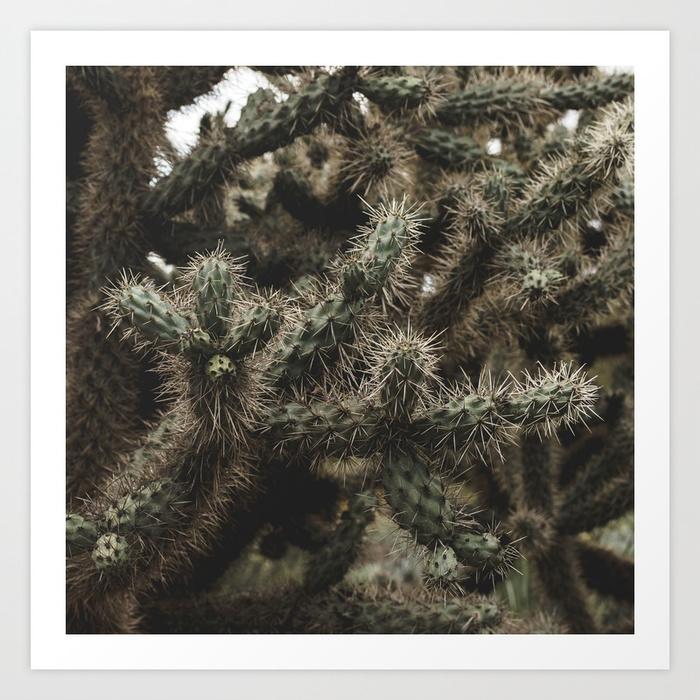 - Cactus_0006 Art Print