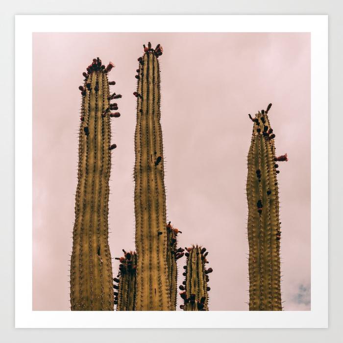- Cactus_0015 Art Print