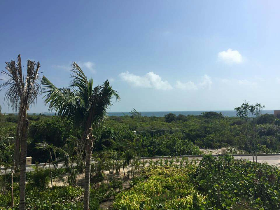 Protected Flora and Fauna at Secrets Playa Mujeres