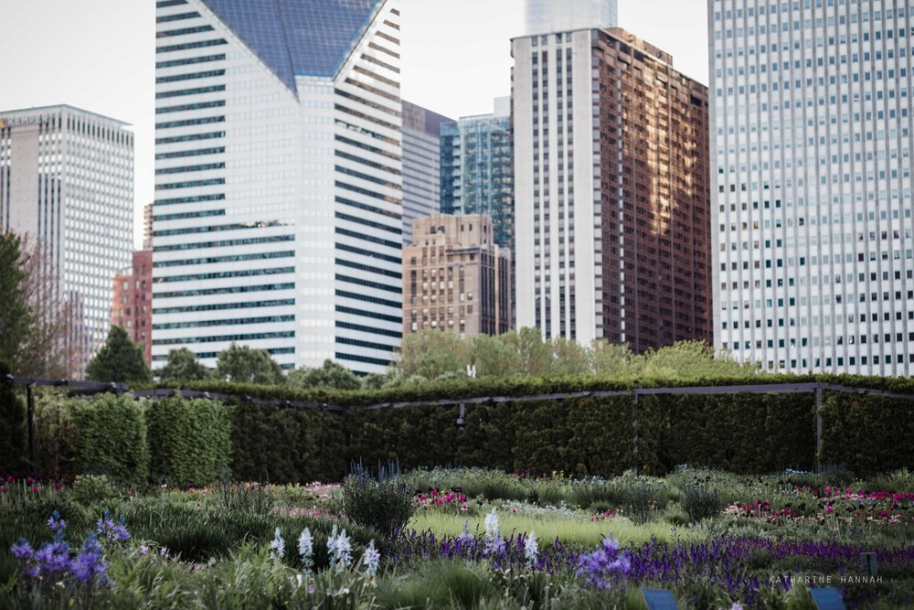 Chicago loop Lurie garden picture