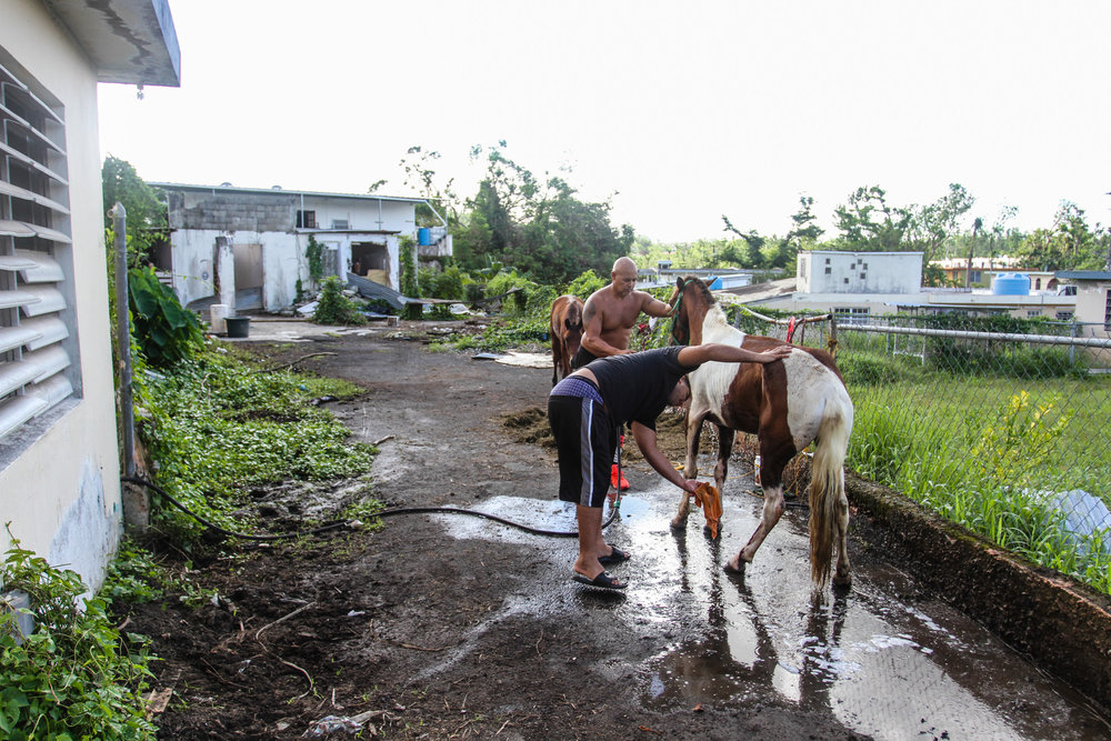 """""""My uncle and my cousin giving one of the horses a bath"""" (Trujillo Alto, PR - November 2017)"""