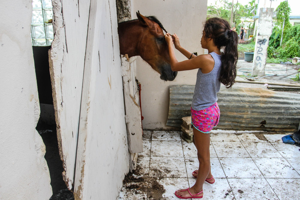 """""""My little cousin trying to braid the horse's hair"""" (Trujillo Alto, PR - November 2017)"""