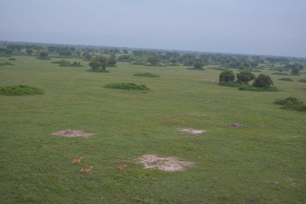 Kasenyi koblek as viewed from above-QENP-Uganda