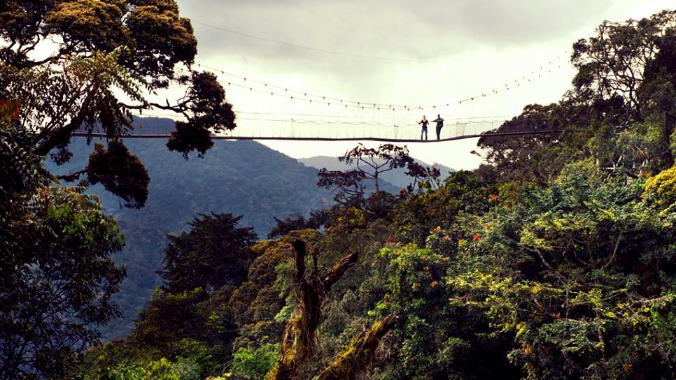 nyungwe-canopy-walk-rwanda.jpg.rend.tccom.966.544.jpg